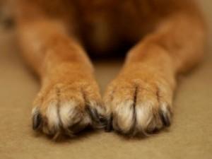 Cane ucciso al Giglio, la proprietaria di Hollie denuncia il carabiniere: ...