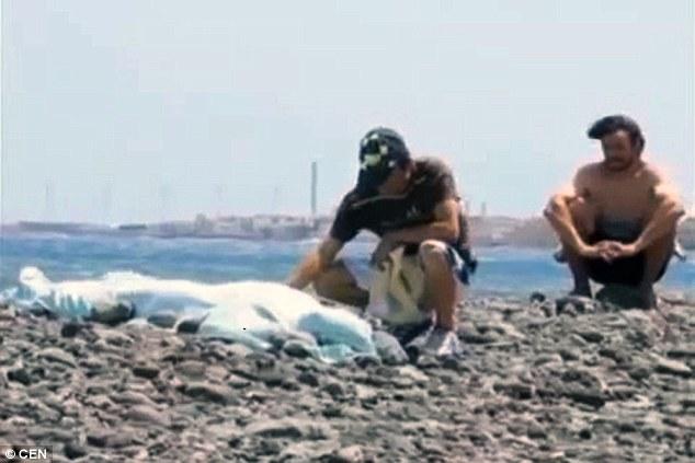 Orrore alle canarie decapitata da una tavola da surf mentre fa immersioni - Tavola surf usata subito it ...