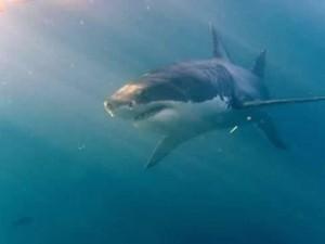 Usa |  squalo uccide giovane al largo di Cape Cod |  non accadeva da oltre 80 anni