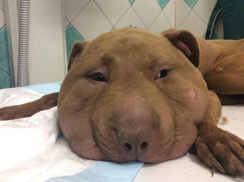 Il cane quasi decapitato da un cappio il muso gonfiato a - Colorazione immagine di un cane ...