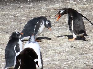 Strage di pinguini al Polo Sud: morti di fame in 150 mila per colpa di un iceberg