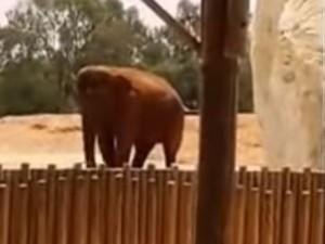 Tragedia in uno zoo in Marocco: elefante uccide con una pietra una bambina