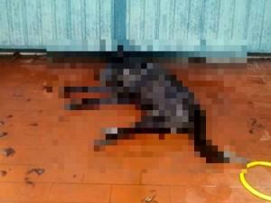 Terni, parte per le vacanze e lascia il cane solo in terrazzo: morto per caldo e mancanza di cibo