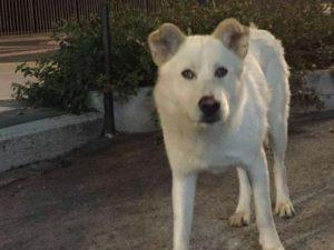 La storia del cane Angelo ha scosso l'Italia, ma il processo ancora non comincia