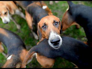"""""""Non so che farmene"""": cacciatore fa uccidere a un amico i suoi 4 cani, denunciati"""