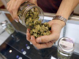 Cannabis terapeutica, da gennaio nelle farmacie italiane: ecco chi può comprarla