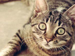 Russia: anziano muore in casa, i suoi 40 gatti lo divorano