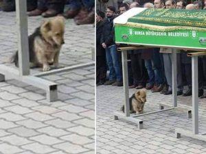 L'amato proprietario muore, cane visita ogni giorno la sua tomba