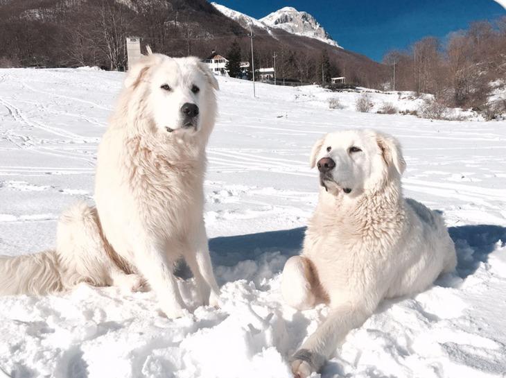 Lupo E Nuvola I Due Cani Dell Hotel Rigopiano Trovano