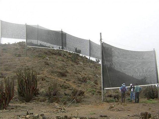 Catturanebbia Perù