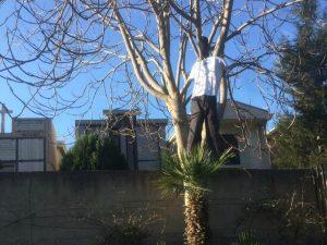 La scioccante protesta a Reggio Calabria: decine di manichini impiccati sugli alberi