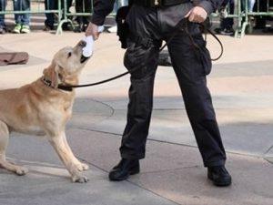Ha scoperto 700Kg di droga e fatto arrestare 27 persone, il cane finanziere Sac va in pensione