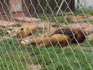Cinquecento animali morti in tre anni, la scoperta nello zoo degli orrori