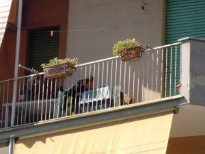 Terni, va in vacanza e lascia il cane in terrazzo senza acqua e cibo: chihuahua morto di stenti