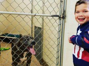 Jaxton, a 4 anni, entra in un canile e cambia la vita a decine di animali