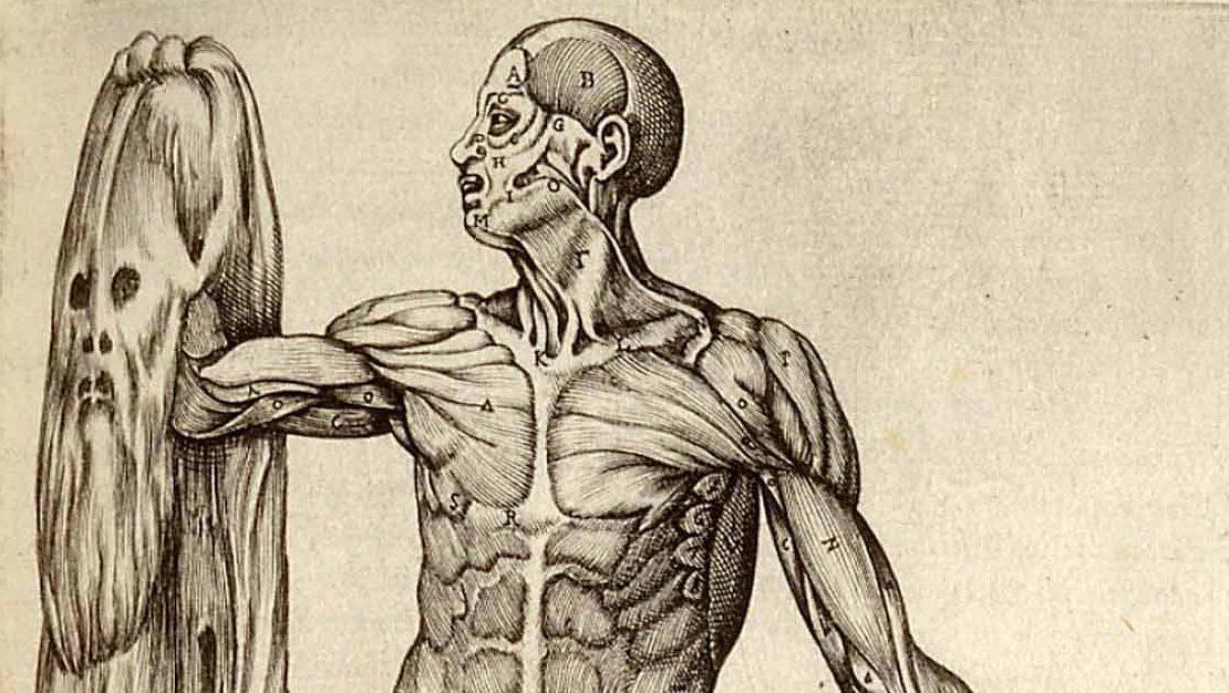 Encantador Leonardo Da Vinci Anatomía Patrón - Imágenes de Anatomía ...