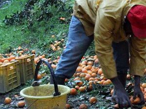 """Oxfam denuncia: """"Il 75% delle lavoratrici in agricoltura costretta a rinunciare a pasti regolari"""""""