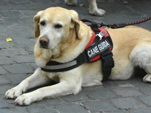 In Parlamento arriva il codice per i diritti degli animali: