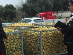 Ladro ruba limoni, ma arrivano altri malviventi e lo derubano: lui chiama carabinieri
