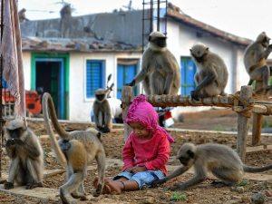 India, bambino di 12 giorni rapito e ucciso da una scimmia