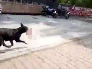 Orrore in India, un cane porta un neonato morto tra le fauci: voleva nutrire i suoi cuccioli