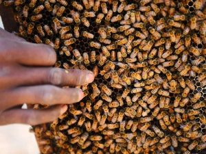 Usa le api per l'agopuntura contro stress e dolori: donna mu
