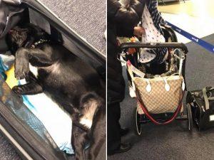 United airlines costringe una cliente a mettere il cane for Cane nella cabina dell aereo