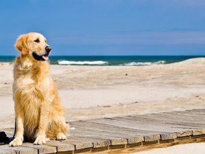 Usa |  un uomo annega nell'Oceano |  voleva salvare il suo cane dalle onde