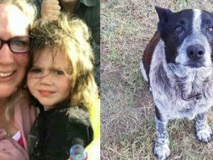 A 3 anni si perde nel bosco, cane cieco e sordo la protegge
