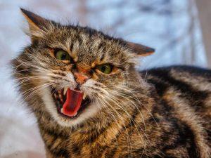 Livorno, donna graffiata da un gatto muore dissanguata: pren