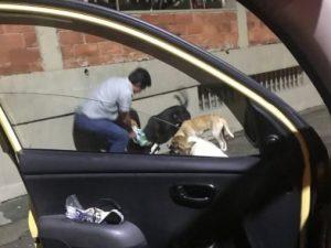 Il tassista amante degli animali, ferma il taxi con la clien