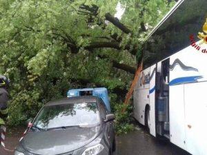 Paura a Firenze: albero cade su un bus turistico, 14 feriti