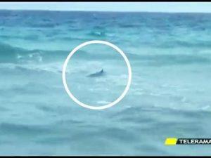 Salento, avvistati tre squali al largo della spiaggia di San