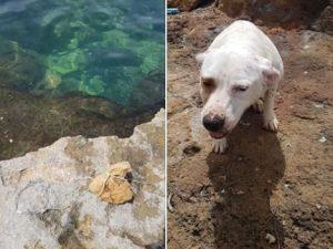 """Cagnolina gettata in mare con pietra al collo, governo: """"Sar"""