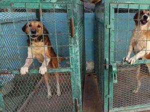 """Cani allevati per il macello, la Corea prova a cambiare: """"Ad"""