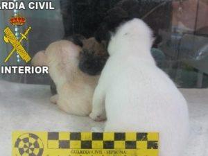 Spagna, in un negozio di animali trovati 31 cani morti e 38 gravemente malati