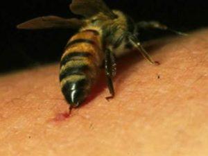 Ivrea, operaio muore per la puntura di una vespa: Tribunale