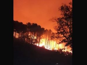 """Pisa, incendio sul Monte Serra, 500 evacuati. I pompieri: """"A"""