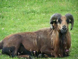 Verona: danno da mangiare a un animale allo zoo, poi lo inve