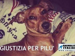 Pistoia, torturò il cane Pilù della fidanzata e pubblicò il