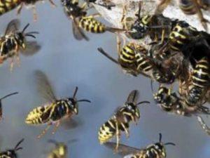 Biella, assalito da sciame di vespe: gli si ferma il cuore, 26enne in Rianimazione