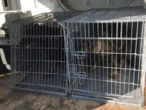 Allevamento lager a Udine: cani segregati 24 ore al giorno i