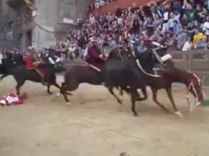 Palio di Siena |  cavallo Raol è stato abbattuto |  ira degli animalisti