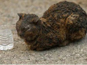 Incendi in California, è strage anche di animali: centinaia