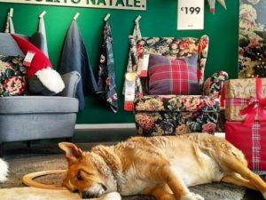 Addio a Bull, uno dei cani che dormiva tra i mobili in espos