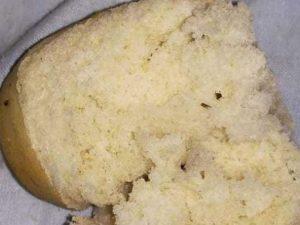 Insetti nei panini della mensa dell'asilo: sequestrati 1600