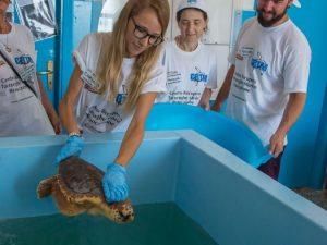 Centro recupero tartarughe di Brancaleone sfrattato, Sos dei