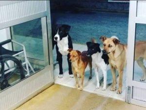 Senzatetto al pronto soccorso, i suoi adorati cani lo aspett