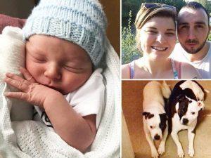 Lasciano il loro neonato da solo coi cani: sbranato. Genitor