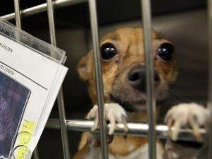 In California cani e gatti in vendita soltanto se provenient